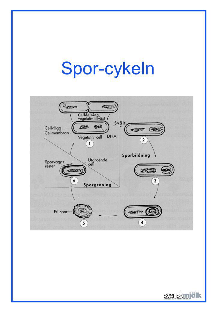 Spor-cykeln