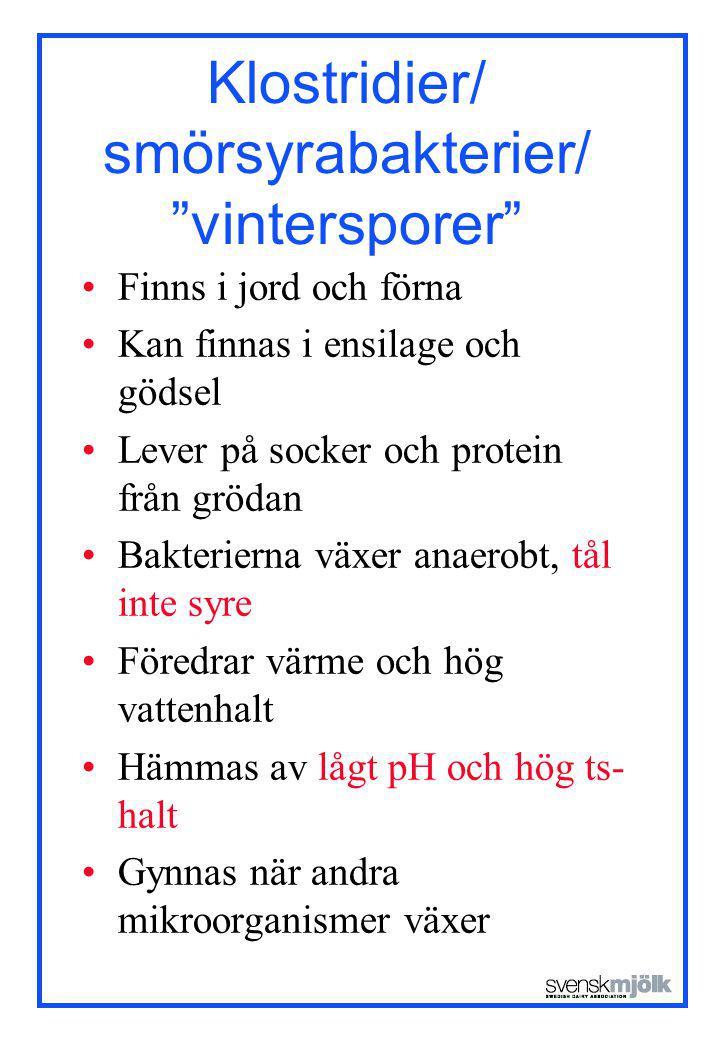 Klostridier/ smörsyrabakterier/ vintersporer