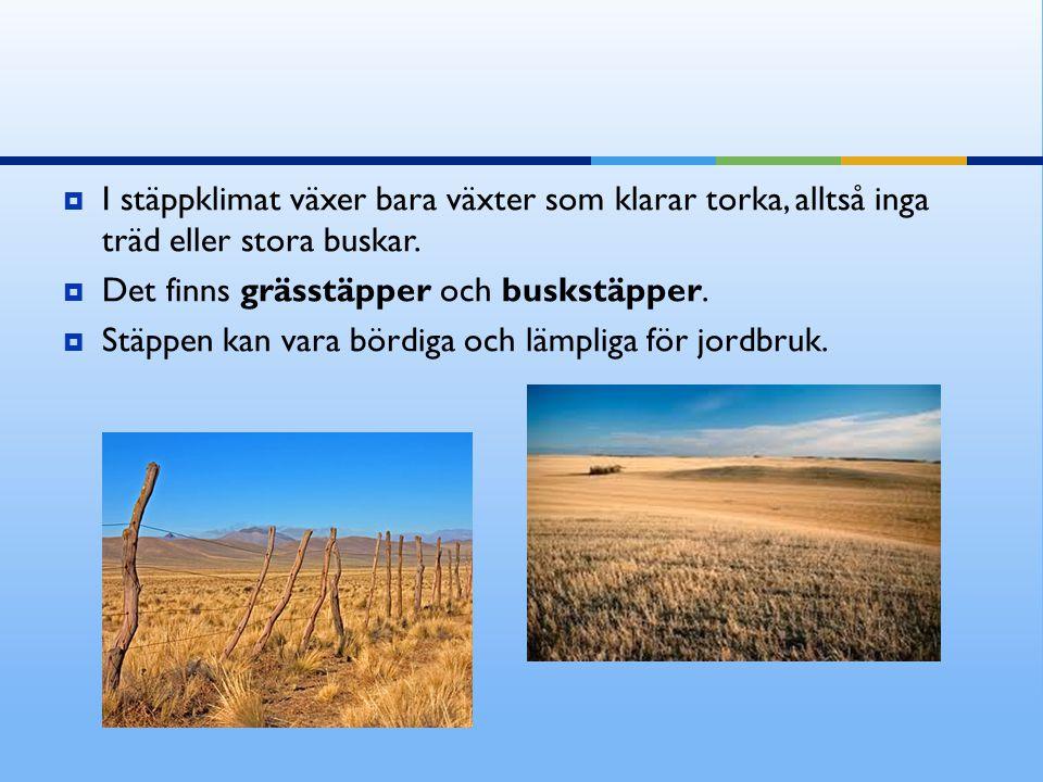 I stäppklimat växer bara växter som klarar torka, alltså inga träd eller stora buskar.