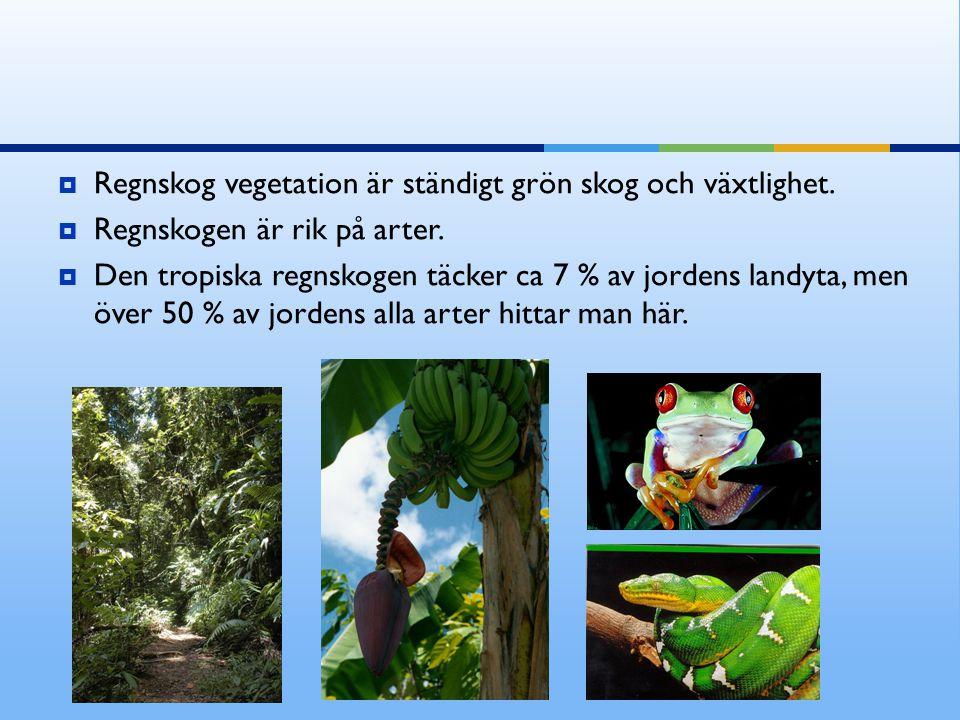 Regnskog vegetation är ständigt grön skog och växtlighet.
