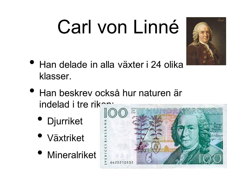 Carl von Linné Han delade in alla växter i 24 olika klasser.