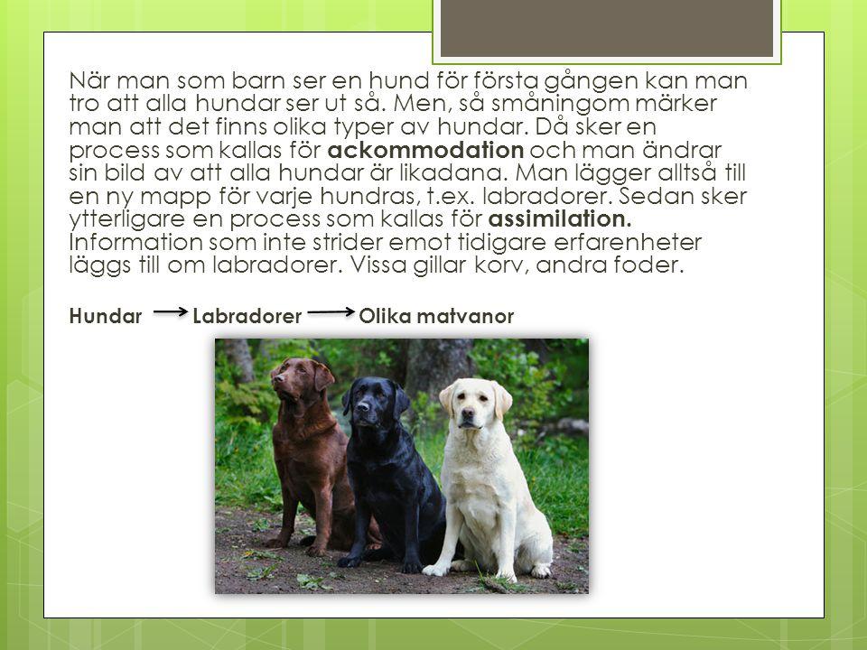 När man som barn ser en hund för första gången kan man tro att alla hundar ser ut så. Men, så småningom märker man att det finns olika typer av hundar. Då sker en process som kallas för ackommodation och man ändrar sin bild av att alla hundar är likadana. Man lägger alltså till en ny mapp för varje hundras, t.ex. labradorer. Sedan sker ytterligare en process som kallas för assimilation. Information som inte strider emot tidigare erfarenheter läggs till om labradorer. Vissa gillar korv, andra foder.