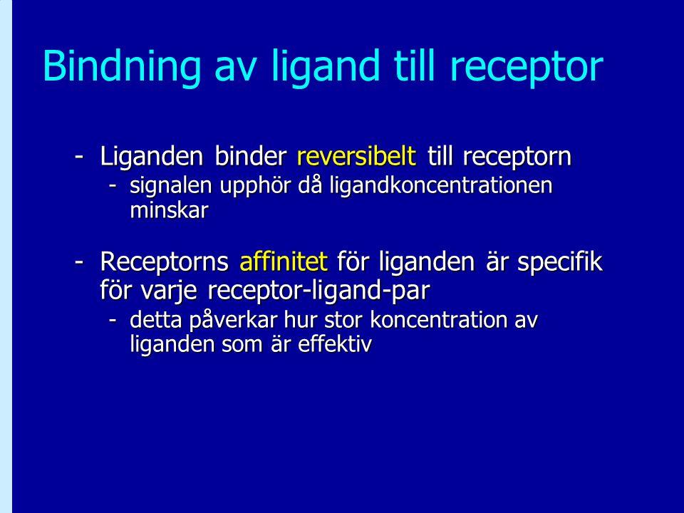 Bindning av ligand till receptor