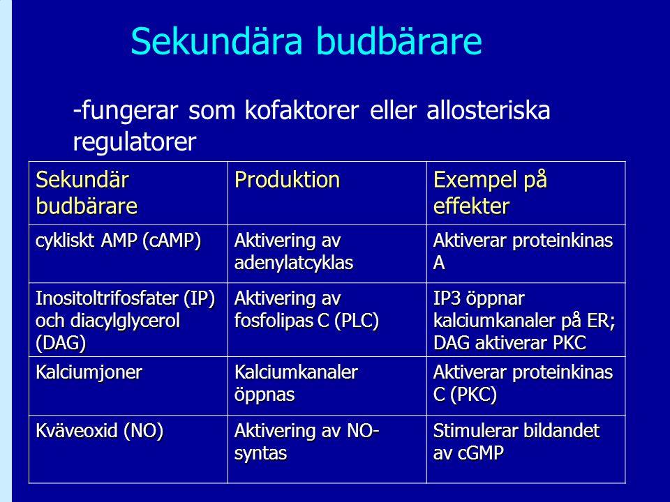 Sekundära budbärare -fungerar som kofaktorer eller allosteriska regulatorer