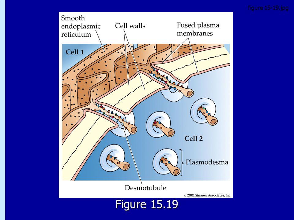 figure 15-19.jpg 15.19 Figure 15.19