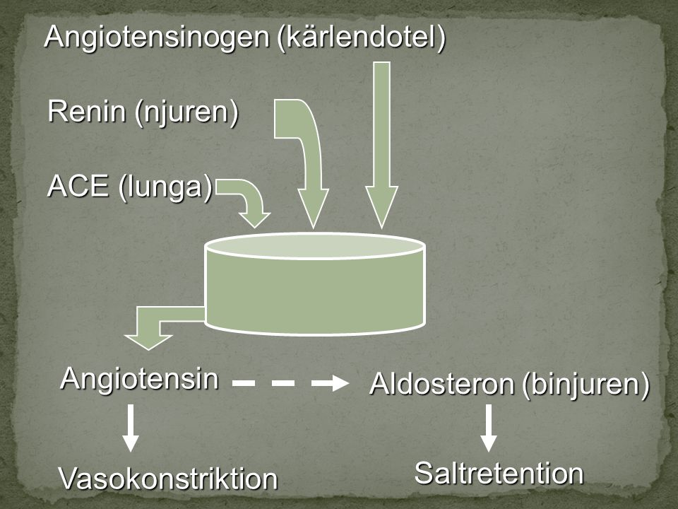 Angiotensinogen (kärlendotel)