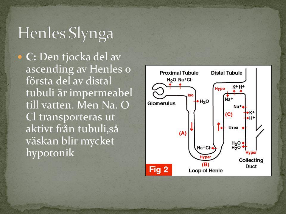 Henles Slynga