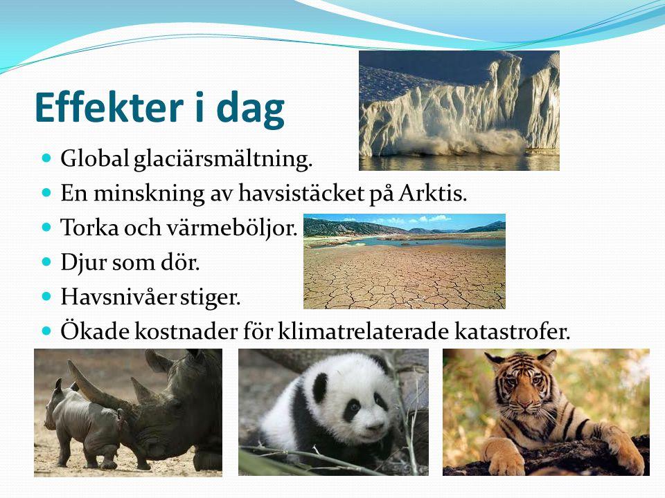 Effekter i dag Global glaciärsmältning.