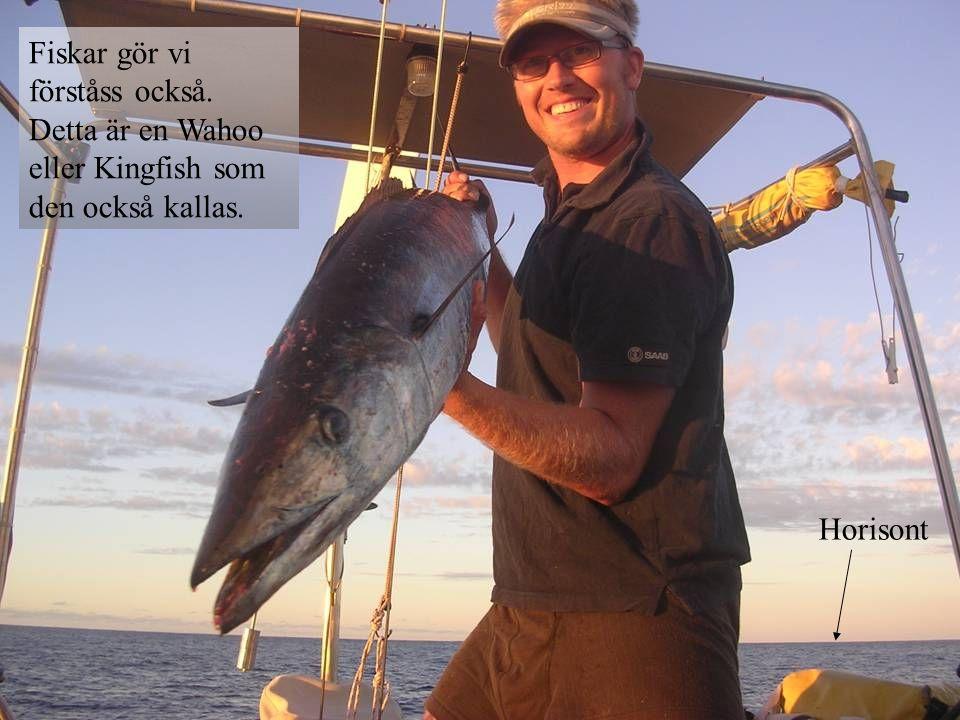Fiskar gör vi förståss också
