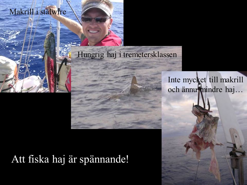 Att fiska haj är spännande!