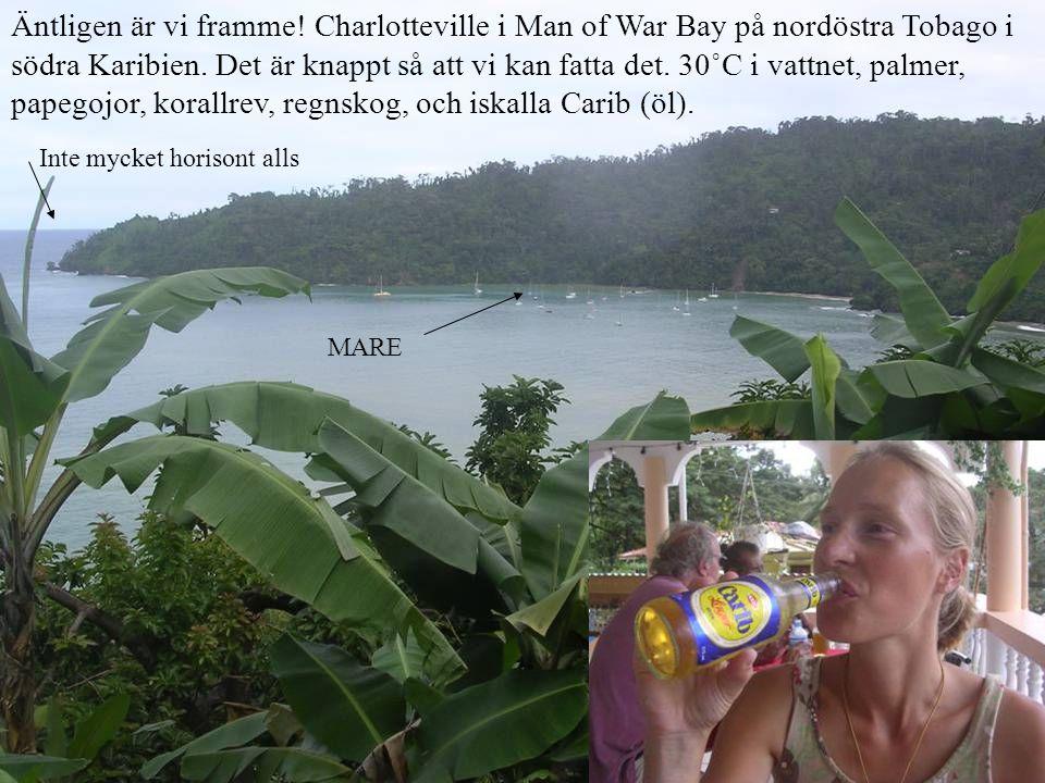 Äntligen är vi framme! Charlotteville i Man of War Bay på nordöstra Tobago i södra Karibien. Det är knappt så att vi kan fatta det. 30˚C i vattnet, palmer, papegojor, korallrev, regnskog, och iskalla Carib (öl).