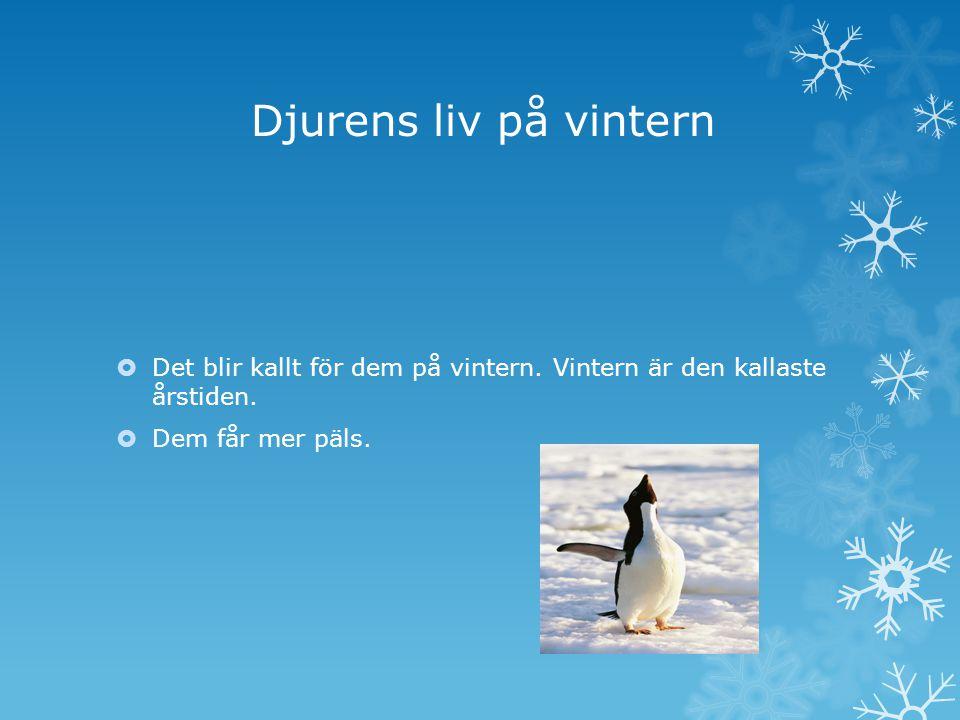 Djurens liv på vintern Det blir kallt för dem på vintern.