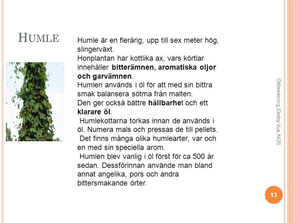 Humle Humle är en flerårig, upp till sex meter hög, slingerväxt.