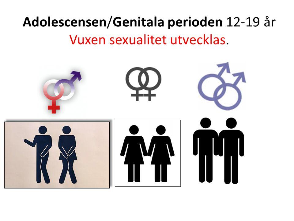 Adolescensen/Genitala perioden 12-19 år Vuxen sexualitet utvecklas.