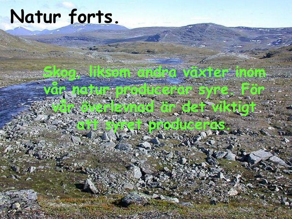 Natur forts. Skog, liksom andra växter inom vår natur producerar syre.