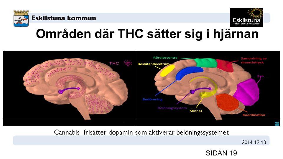 Områden där THC sätter sig i hjärnan