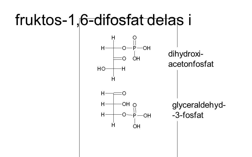fruktos-1,6-difosfat delas i