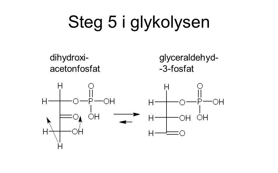 Steg 5 i glykolysen dihydroxi-acetonfosfat glyceraldehyd--3-fosfat