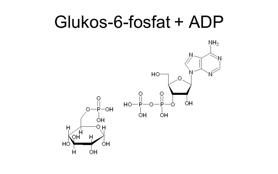 Glukos-6-fosfat + ADP