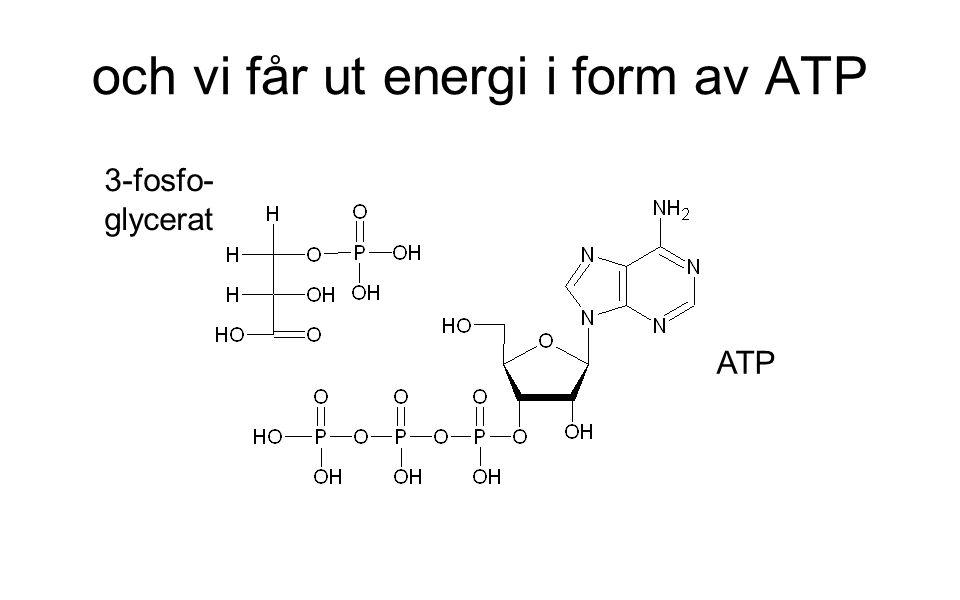 och vi får ut energi i form av ATP