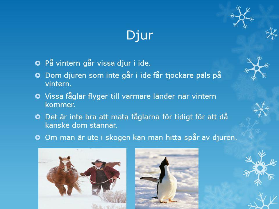 Djur På vintern går vissa djur i ide.