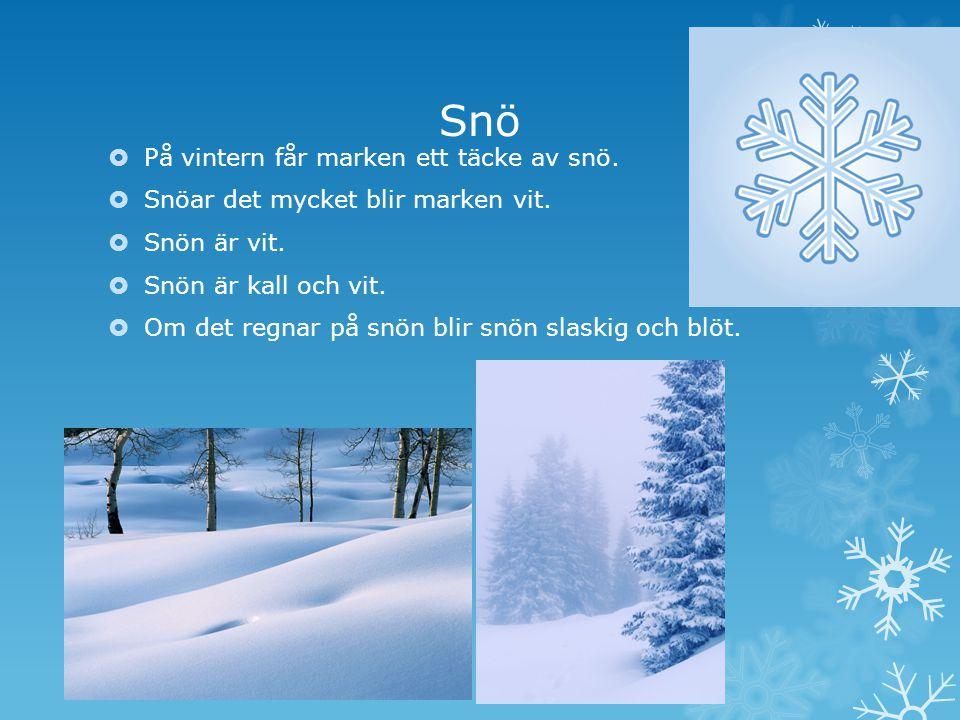 Snö På vintern får marken ett täcke av snö.