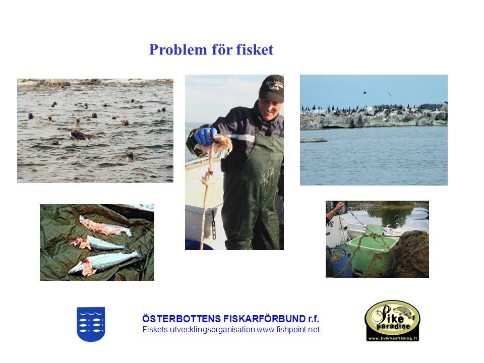 Problem för fisket ÖSTERBOTTENS FISKARFÖRBUND r.f.