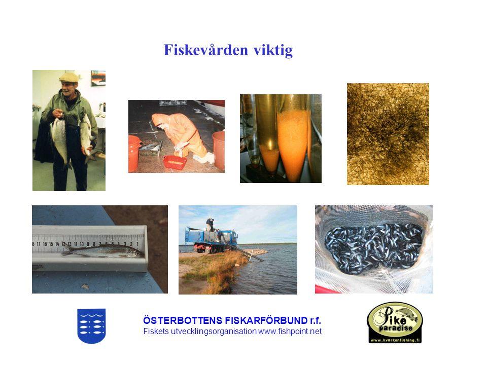 Fiskevården viktig ÖSTERBOTTENS FISKARFÖRBUND r.f.