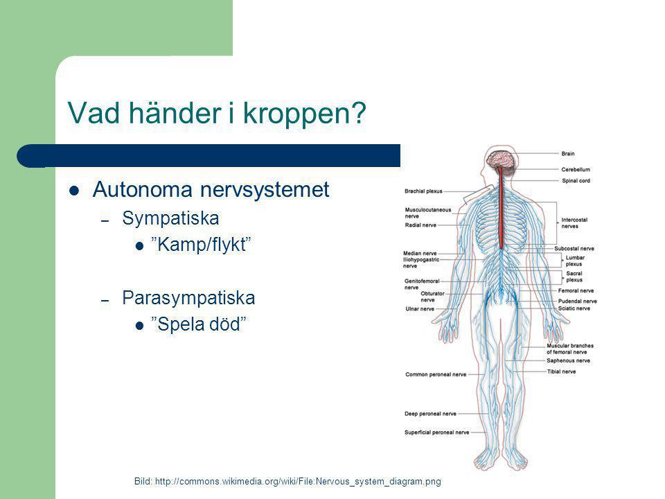 Vad händer i kroppen Autonoma nervsystemet Sympatiska Kamp/flykt