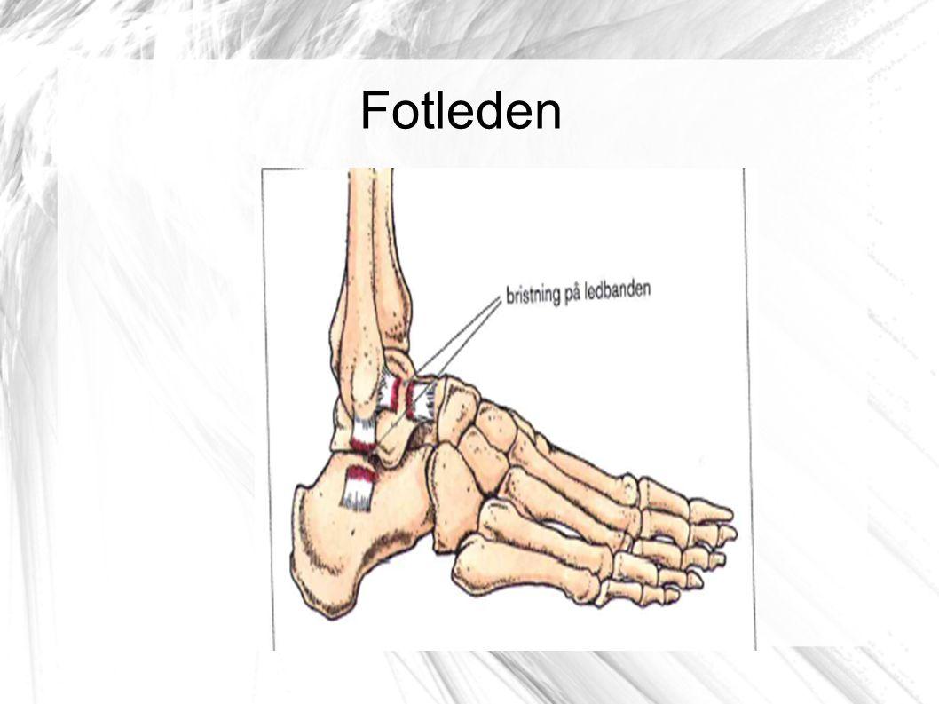 Fotleden