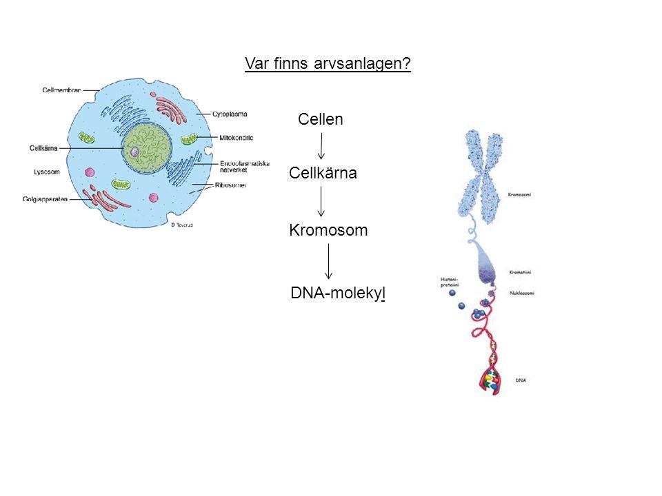 Var finns arvsanlagen Cellen Cellkärna Kromosom DNA-molekyl