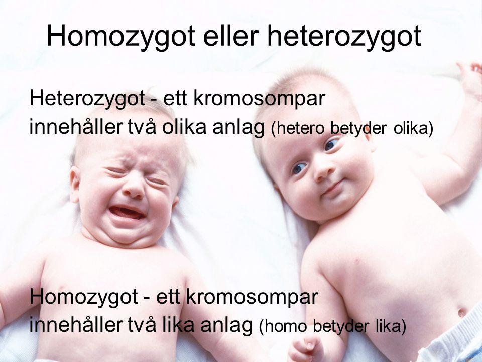 Homozygot eller heterozygot