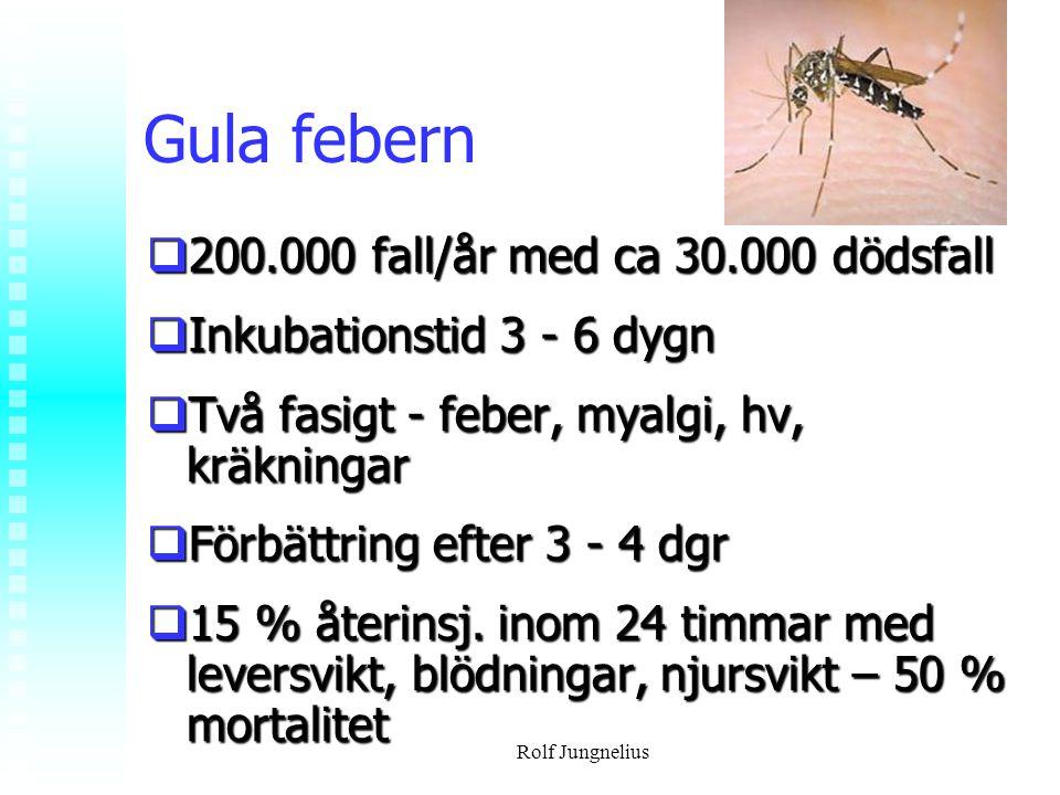 Gula febern 200.000 fall/år med ca 30.000 dödsfall