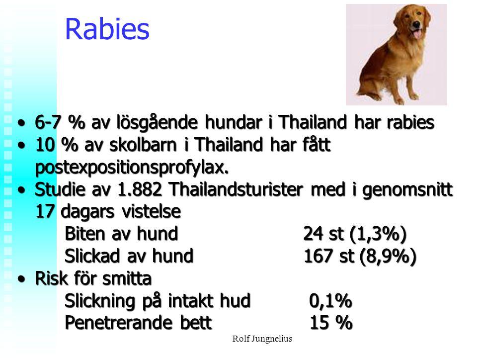 Rabies 6-7 % av lösgående hundar i Thailand har rabies