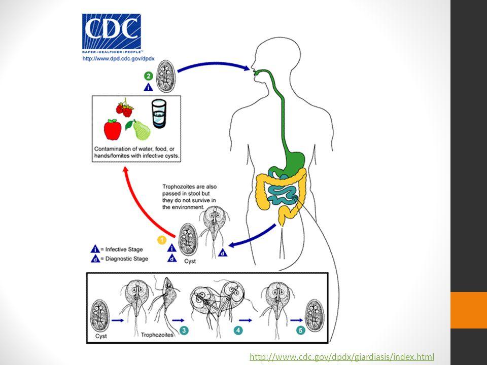http://www.cdc.gov/dpdx/giardiasis/index.html