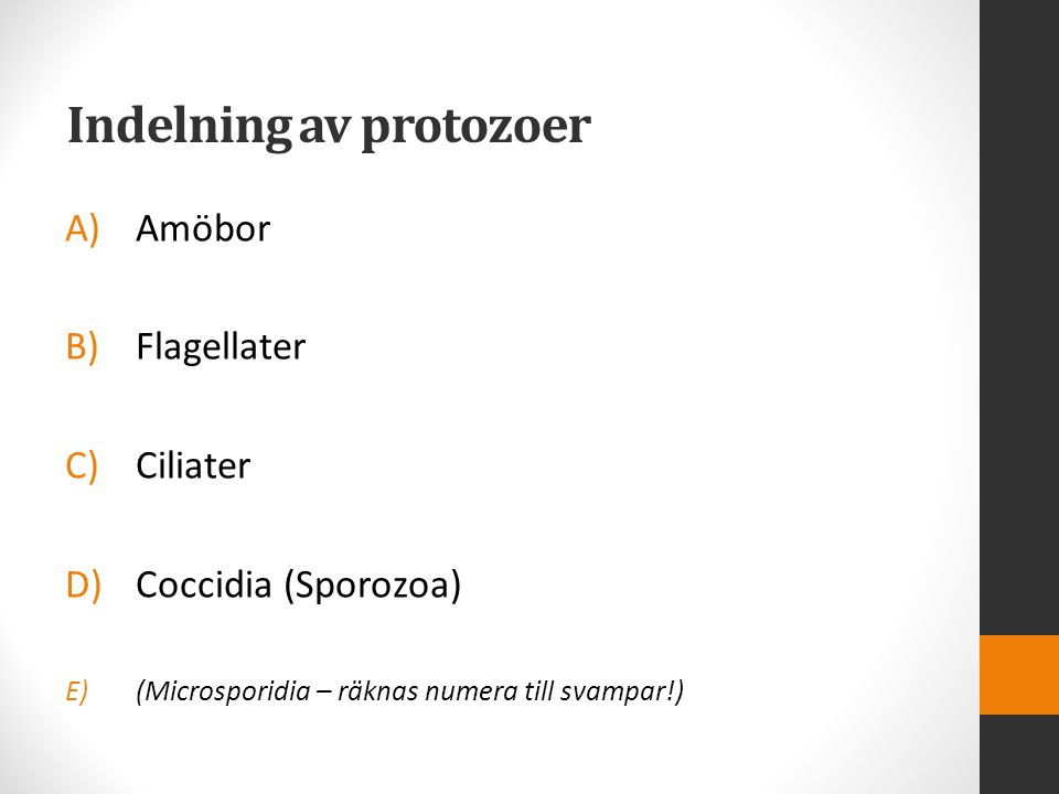 Indelning av protozoer
