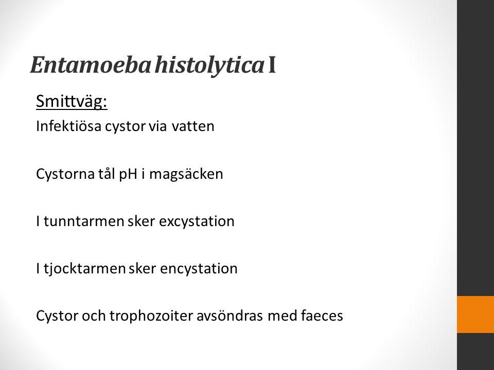 Entamoeba histolytica I