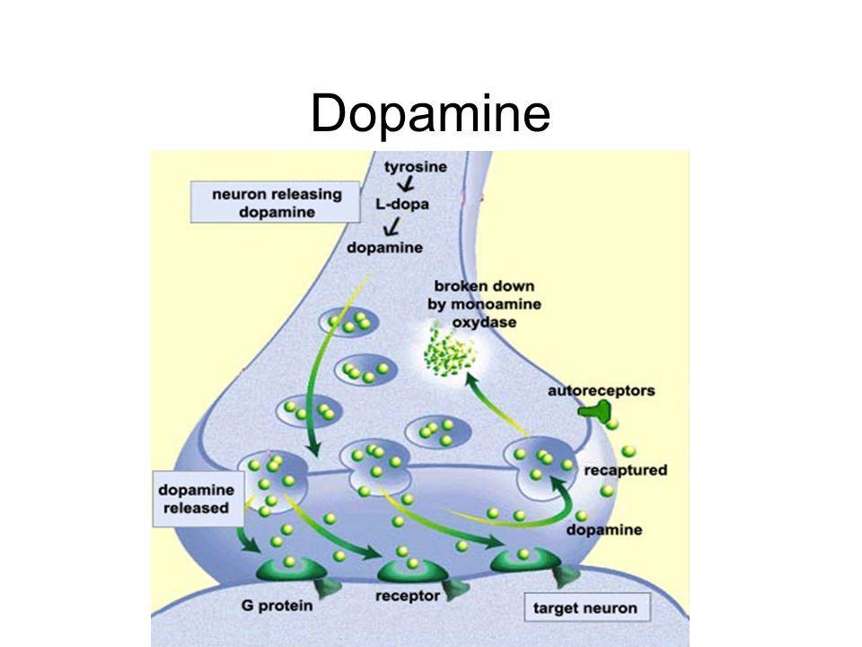 Dopamine Nervceller kommunicerar med dopamine DAT, överaktiva hos ADHD
