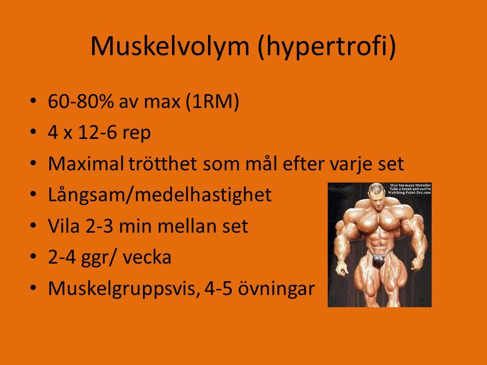 Muskelvolym (hypertrofi)