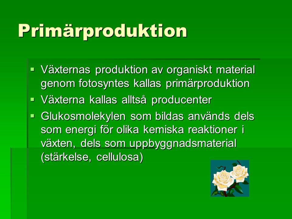 Primärproduktion Växternas produktion av organiskt material genom fotosyntes kallas primärproduktion.