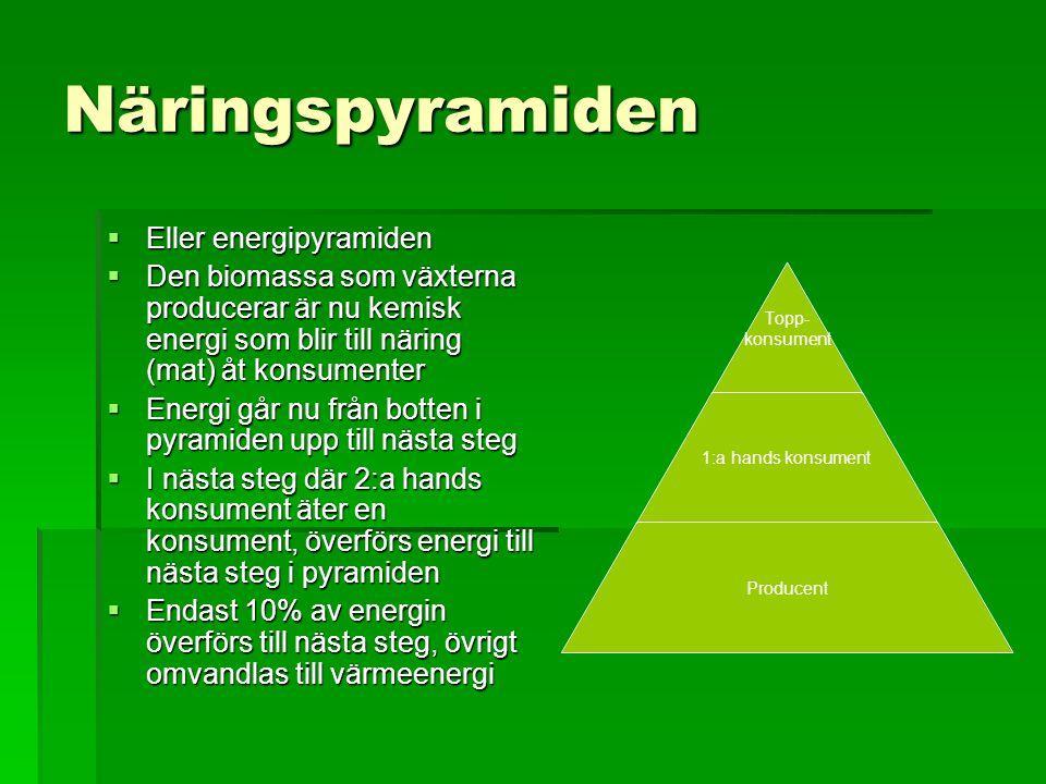 Näringspyramiden Eller energipyramiden