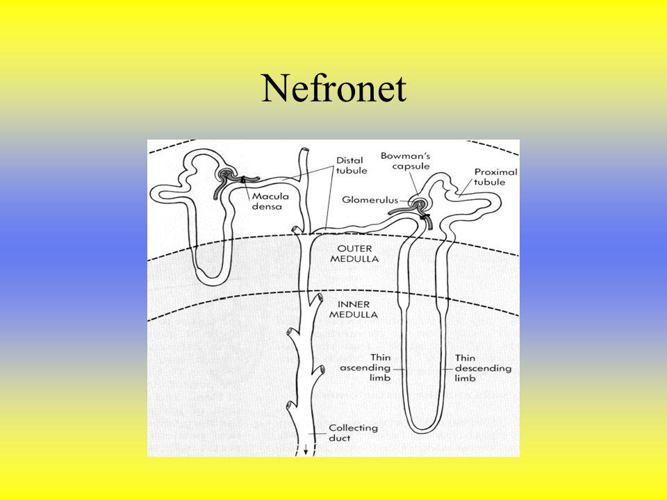 Nefronet