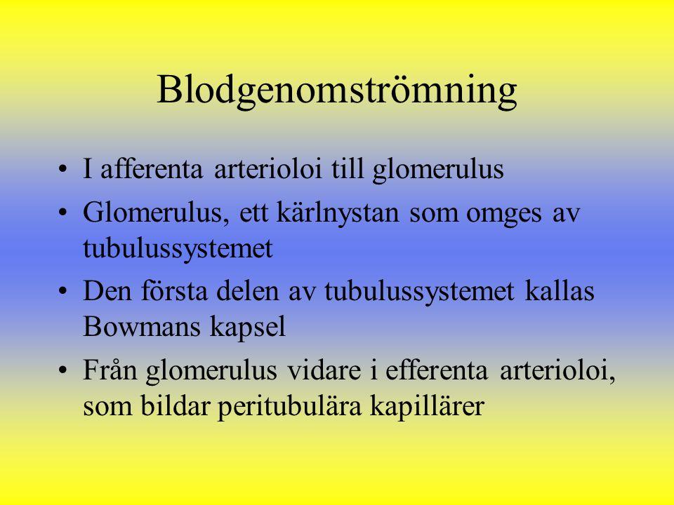 Blodgenomströmning I afferenta arterioloi till glomerulus