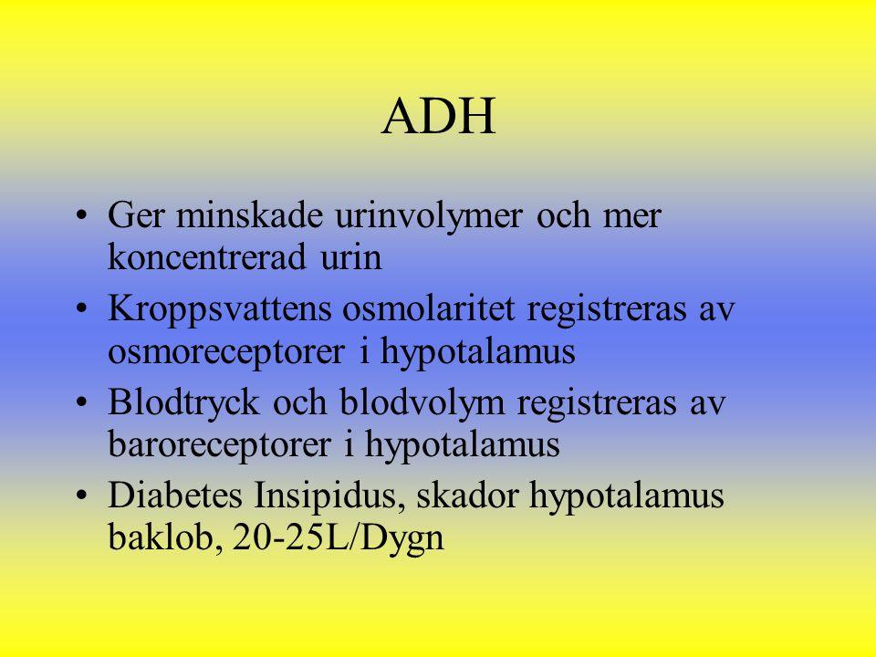ADH Ger minskade urinvolymer och mer koncentrerad urin