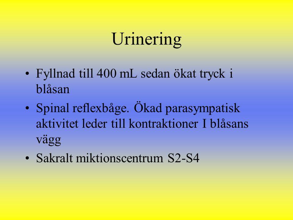 Urinering Fyllnad till 400 mL sedan ökat tryck i blåsan