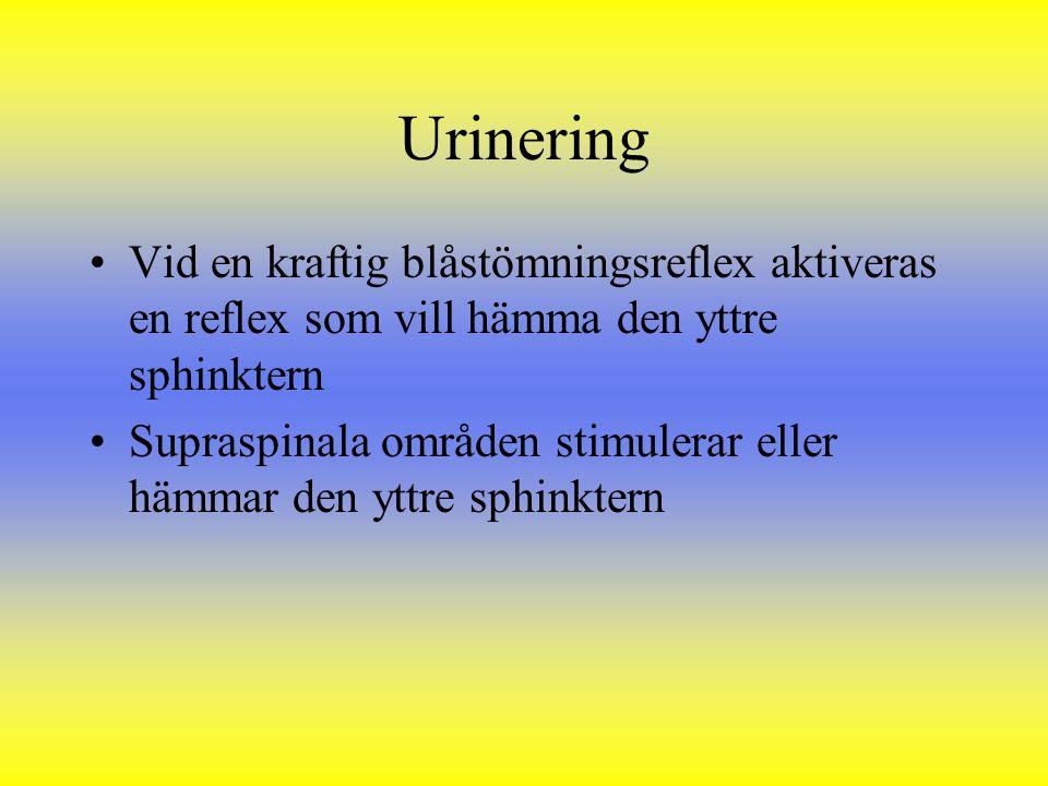 Urinering Vid en kraftig blåstömningsreflex aktiveras en reflex som vill hämma den yttre sphinktern.
