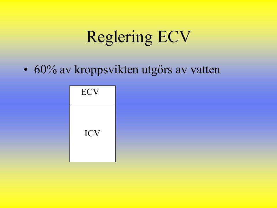 Reglering ECV 60% av kroppsvikten utgörs av vatten ECV ICV