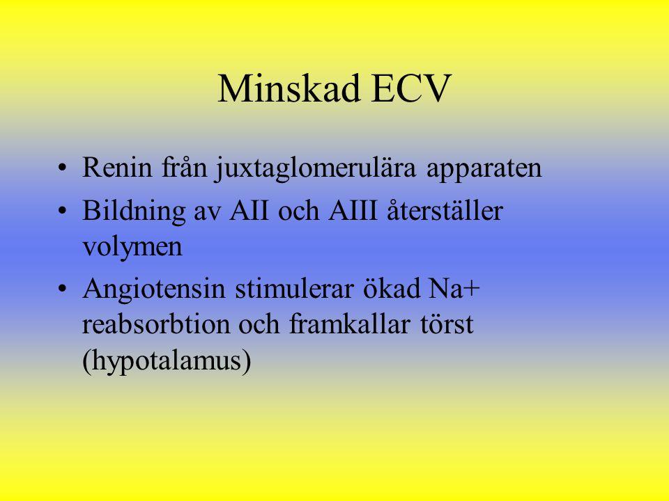 Minskad ECV Renin från juxtaglomerulära apparaten