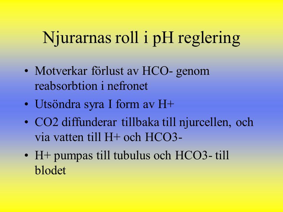 Njurarnas roll i pH reglering