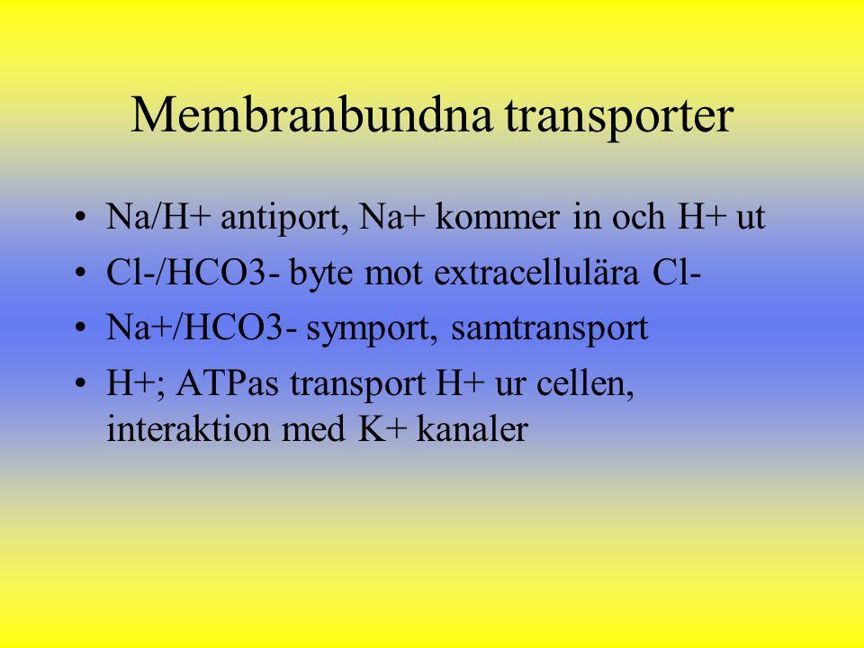 Membranbundna transporter